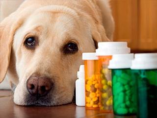 Farmacie veterinara online
